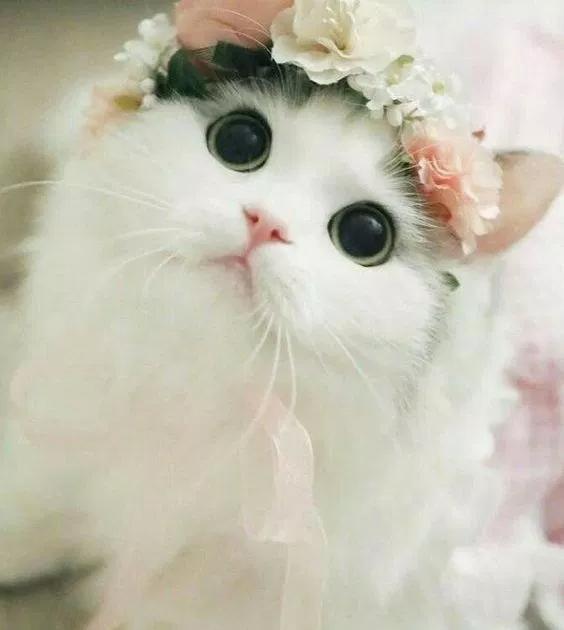 صور وخلفيات قطط صغيرة جميلة مناسبة للجوال لحن الحياة Cat Day Beautiful Cats Cats