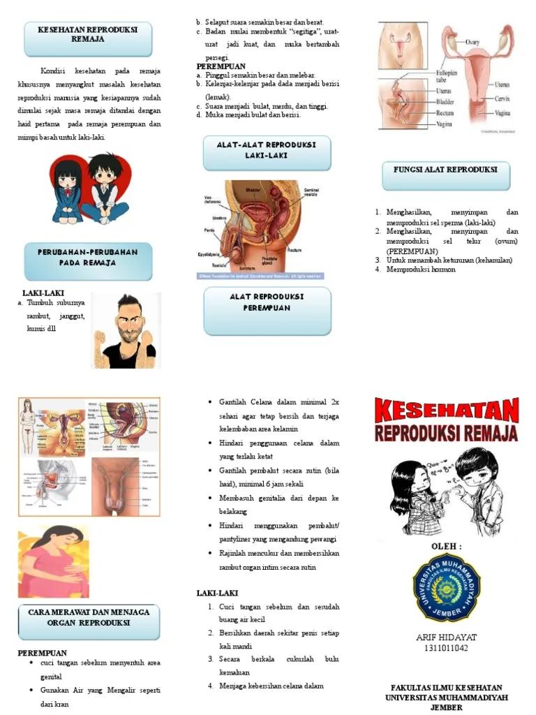 Leaflet Kesehatan Reproduksi Remaja Hidup Sehat Kesehatan Remaja Kesehatan Remaja
