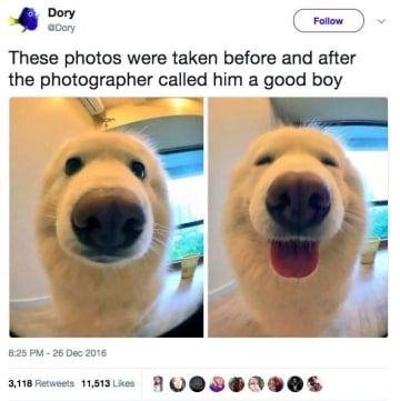 I Love Good Boys Too, But What About All The Good Girls?