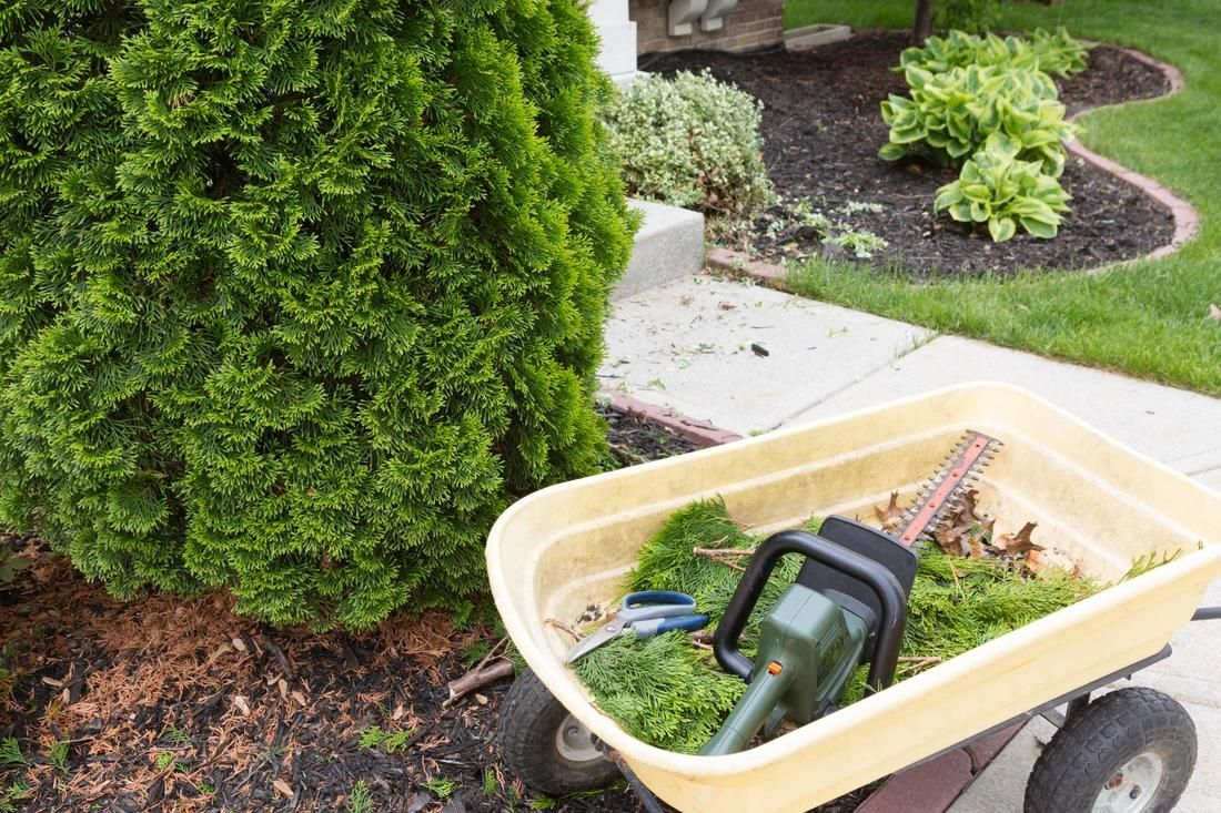 Trimming your tree may sound like a simple thing but it is