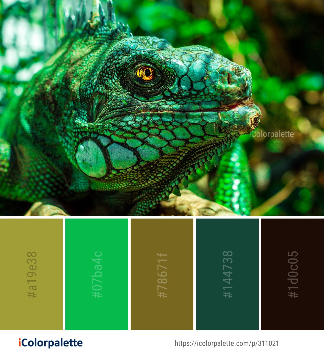 Color Palette Ideas Icolorpalette Colors Inspiration Graphics Design Inspiration Beauti Color Schemes Colour Palettes Color Palette Green Colour Palette