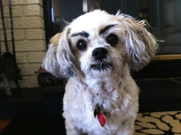 This Dog Is Judgemental Designtaxi Com Dog With Eyebrows Cute Funny Animals Dogs