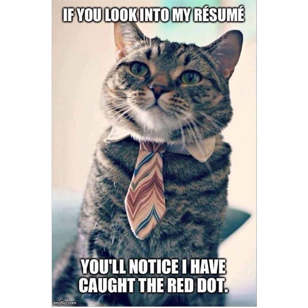When you pad your résumé with extra skills: #jobsearch | What\'s on ...