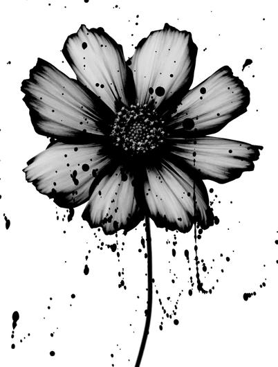 Pb Flower 1 Quadros Preto E Branco Flores Preto E Branco