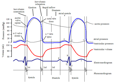 Cardiac cycle wikipedia the free encyclopedia revive fountains cardiac cycle wikipedia the free encyclopedia ccuart Gallery