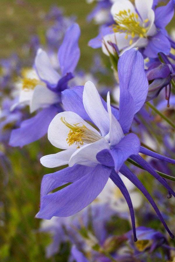 Pin On Cicek Aski Flowers