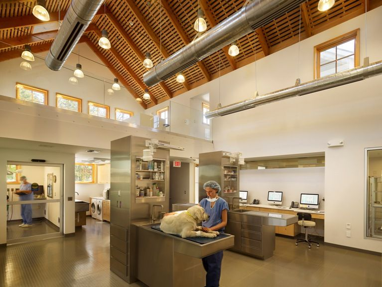 Beautiful Clinic Veterinary Hospital Animal Hospital Hospital Design