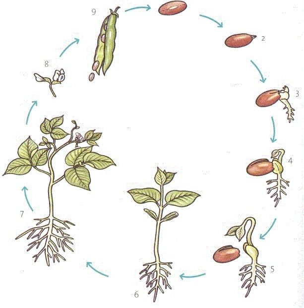 zaadje tot plant zoeken planten