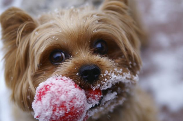 Animal Shelters & Rescues for Pet Adoption Pet safe ice