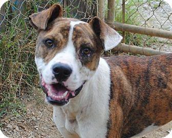 Ernie URGENT Calhoun County Humane Society, Inc. in