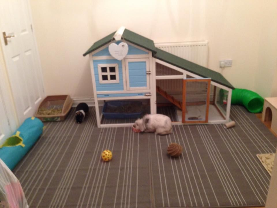 This is my bunny room which I thought I would upload so I could give some inspiration or tips to other bunny lovers out there :)