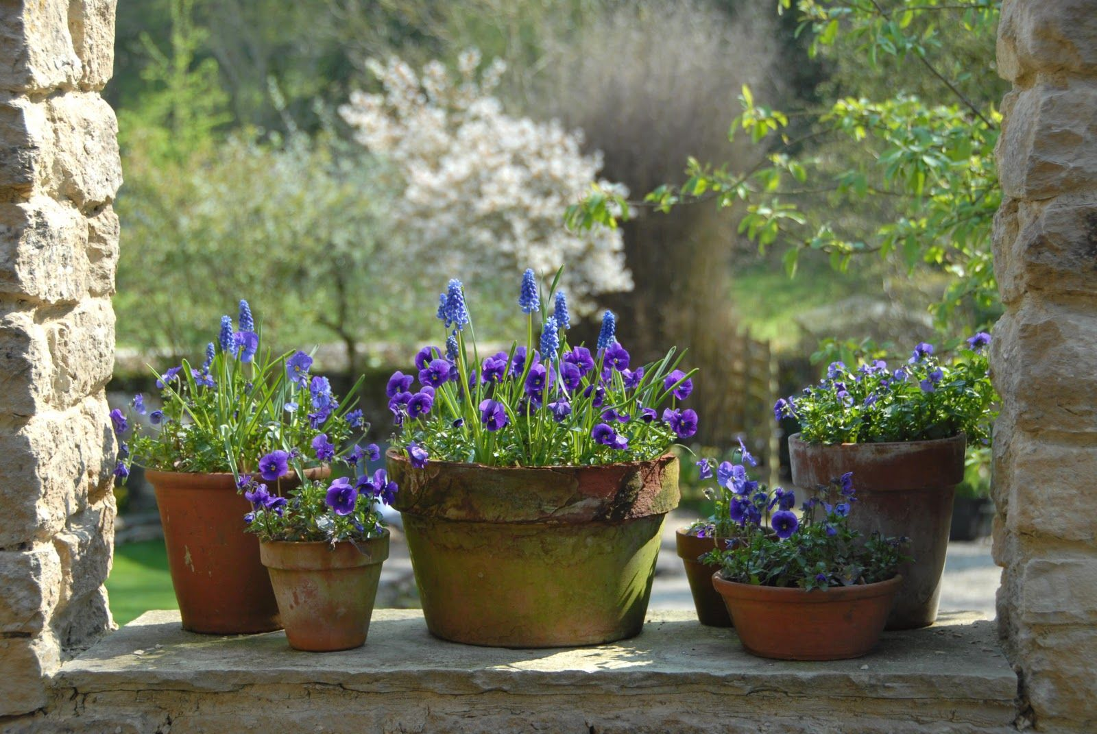 It never occurred to me to pot up some grape hyacinths and friends!  So pretty!