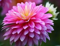 flowers in bloom - Google Search