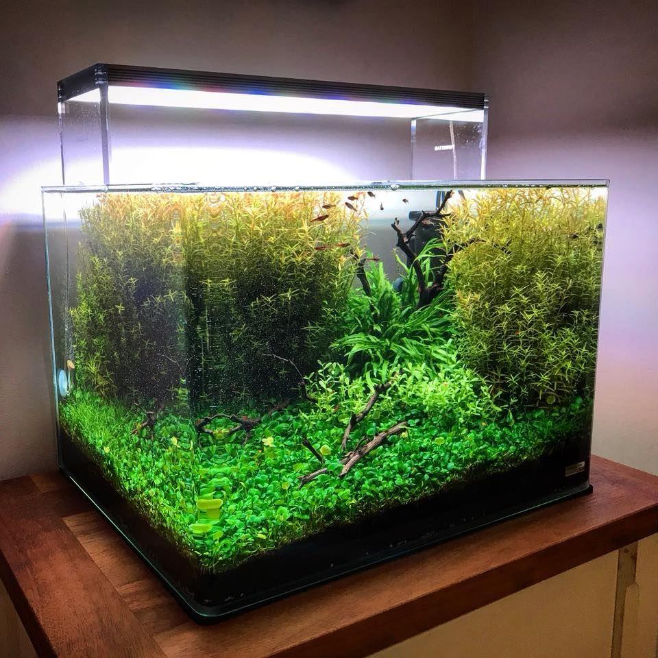 Penn plax cascade filtro interno review akwaria pinterest