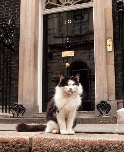 The Pets That Have Lived In Downing Street In Pictures Cats Animal Facts Beautiful Cats