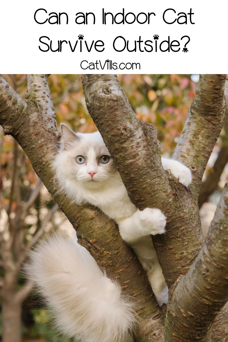 Odds Of An Escaped Indoor Cat Surviving Returning Home Safely Cats And Kittens Cat Pics Cats