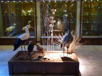 Museo della Fauna