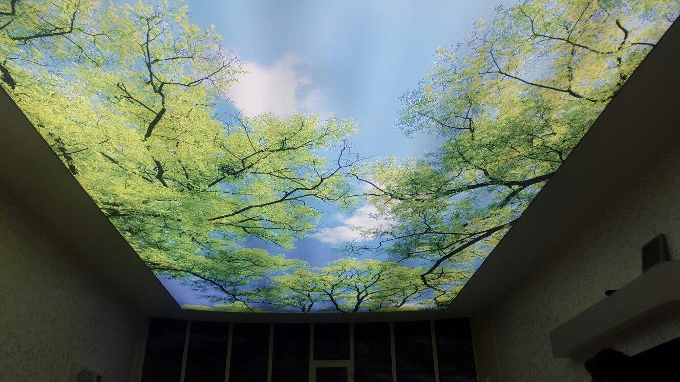 الطائف الجوهره للديكور طريف الشفا نازل جانب مسجد أسامه بن زيد Photo Wall Photo Aquarium