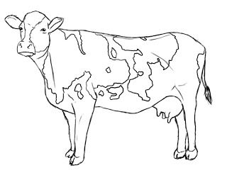 How To Draw A Cow | Clean Lines | Drawings, Cow drawing, Cow