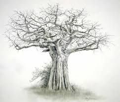 image result for baobab tree drawing my board pinterest rh pinterest com African Baobab Tree in USA little prince baobab tree tattoo