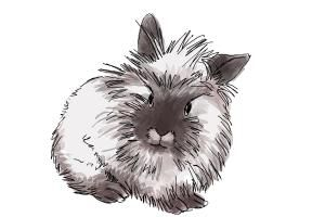 Easy Line Drawings Of Animals : How to draw a lionhead bunny drawingnow tattoo likes pinterest