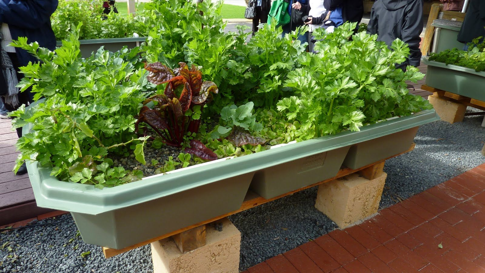 17 Best 1000 images about Aquaponics on Pinterest Gardens Backyards