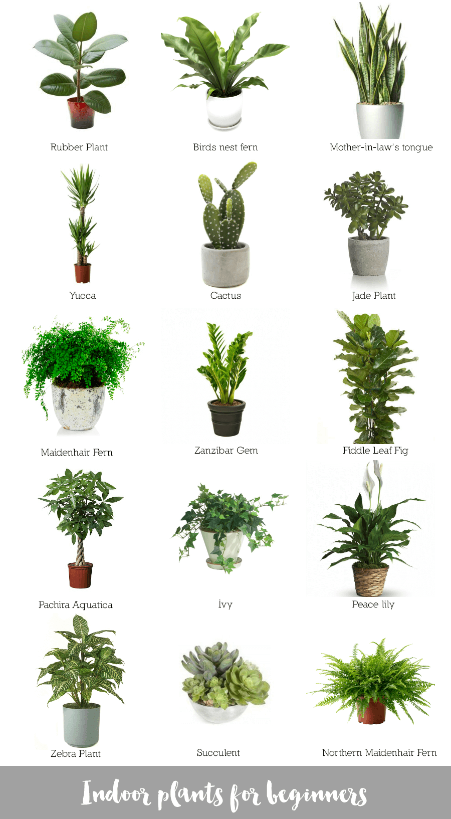 Indoor plants for beginners is part of House plants indoor - Hi there! A few days ago I collated a blog post on ways you can use plants to decorate your home  Today I thought I'd