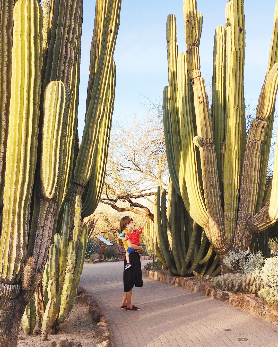 The Ultimate Arizona Bucket List: 101 Things to Do