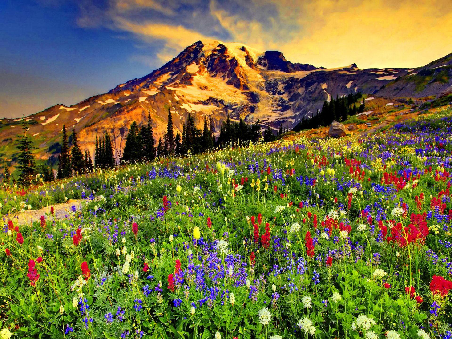Смотреть картинки с пейзажем и цветами