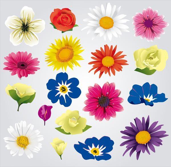 Colorful Flowers Vector Illustrator Pack Free Vectors Flowers