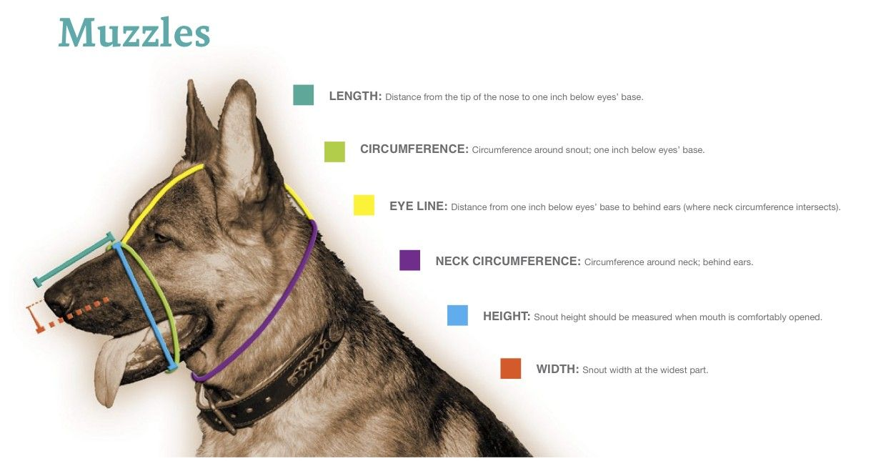 Dt Freedom Muzzle And How To Measure Attack Dog Training Dog