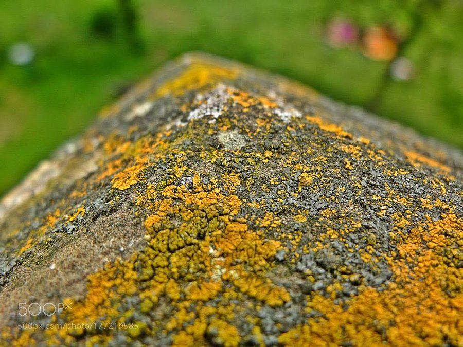 RT: #Photography   gelbe Flechten - Xanthoria parietina   #PhotoOfTheDay #Travel #Photo https://t.co/3EBn0PWeuP via Randallr75 #followme #photography
