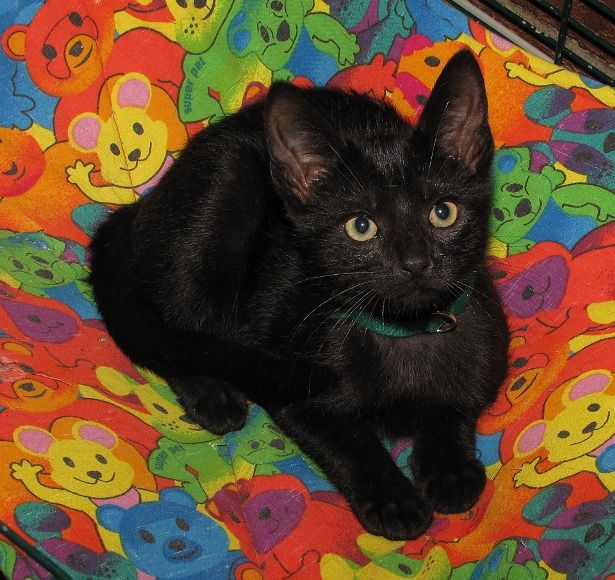 Black Kitten Names Cute Cats Pictures Madelta Pinterest Cute