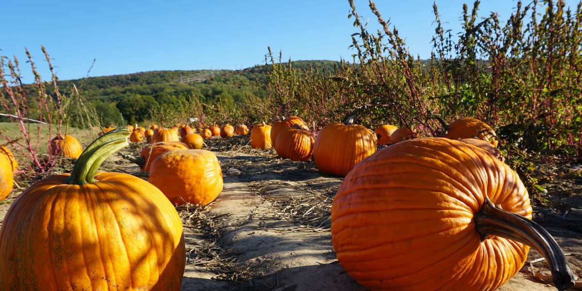Check out the Best Pumpkin Patch in Your State (Some Even