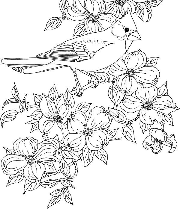 Cardinal Bird And Blossom Flower Coloring Page Coloring Sun Bird Coloring Pages Coloring Pages Flower Coloring Pages