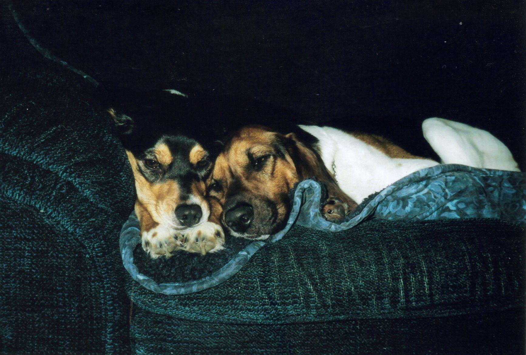 Bailey and Jake - January 2005