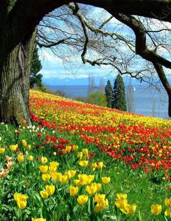 Landscapes Flowers Paysages Printemps Paysage Jolie Paysage