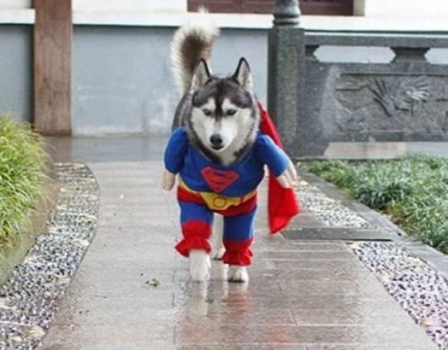Pup & Daily Awww: Animals in Halloween costumes! (33 photos) | Animal ...