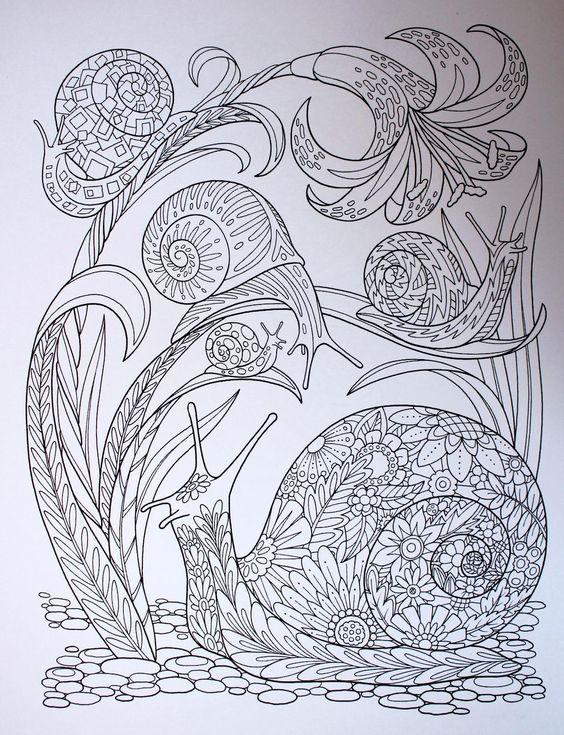 Pin de Rosa María en Insectos 01 | Pinterest | Insectos