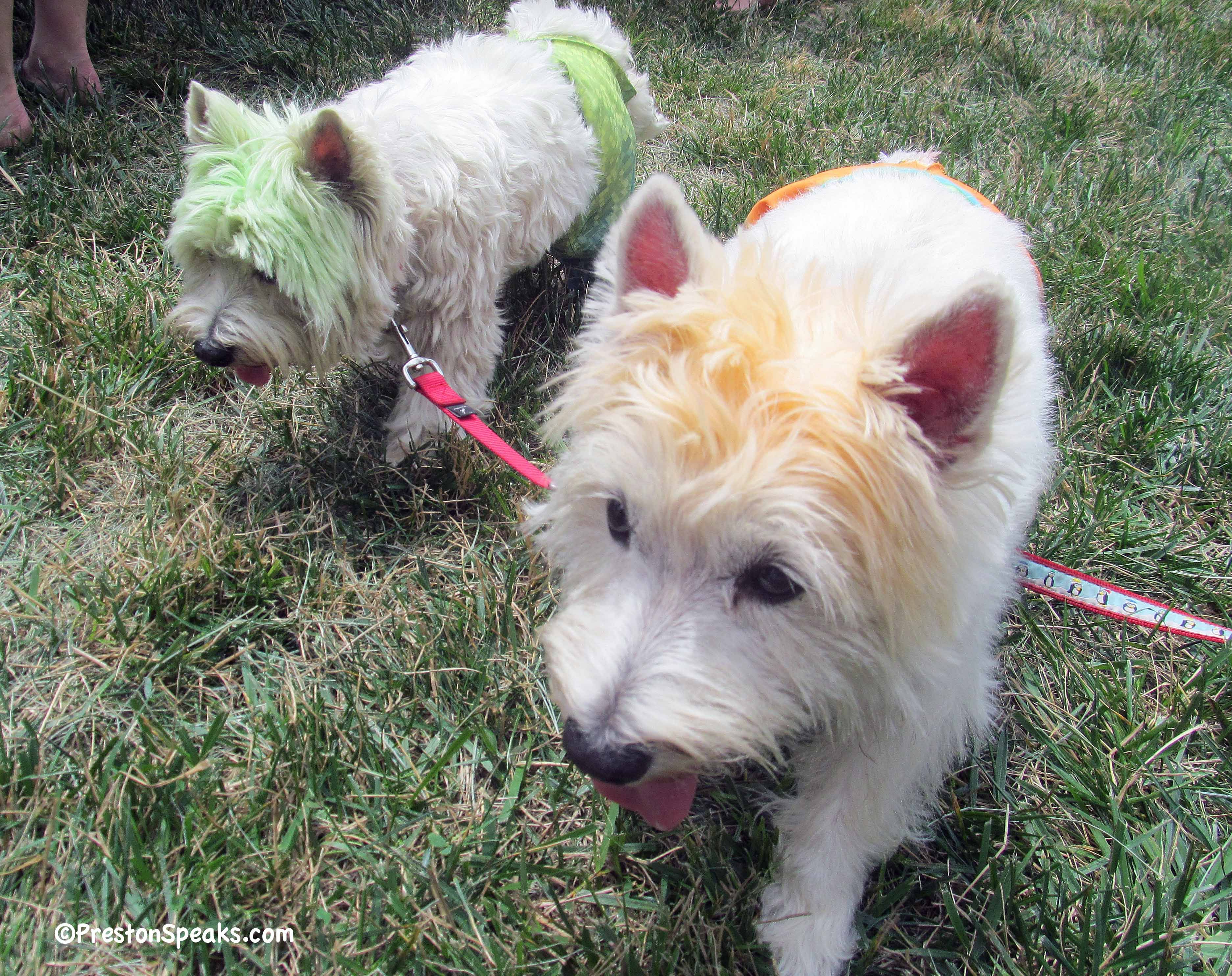 These Dogs Were Surfer Dogs And They Won The Best Dressed Boy Dogs