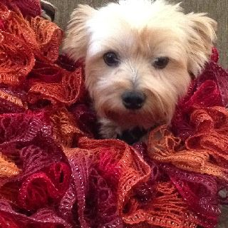 Payton modeling my new Sashay scarf.  It took several redo's, but it came out super cute, and I love the color.