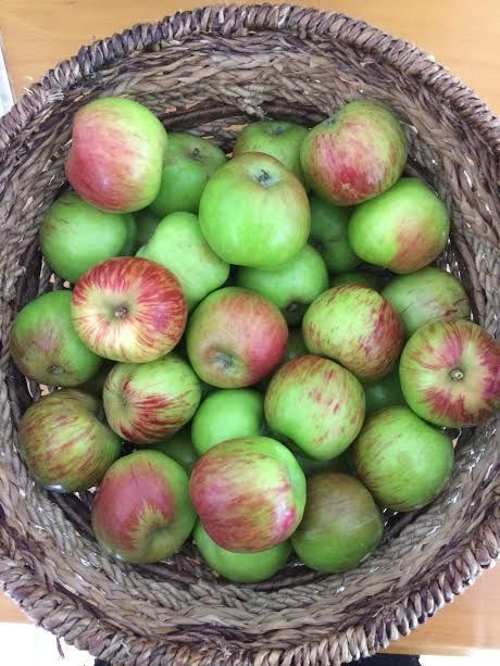 Slow Food Auckland: Oratia Beauty, our Ark of Taste New Zealand apple, is ready!... ,  #apple #Ark #Auckland #beauty #Drink #Food #Fruits #MealPlan #MealPlanning #Meat #Oratia #Planning #ready #Slow #Snacks #taste #Zealand
