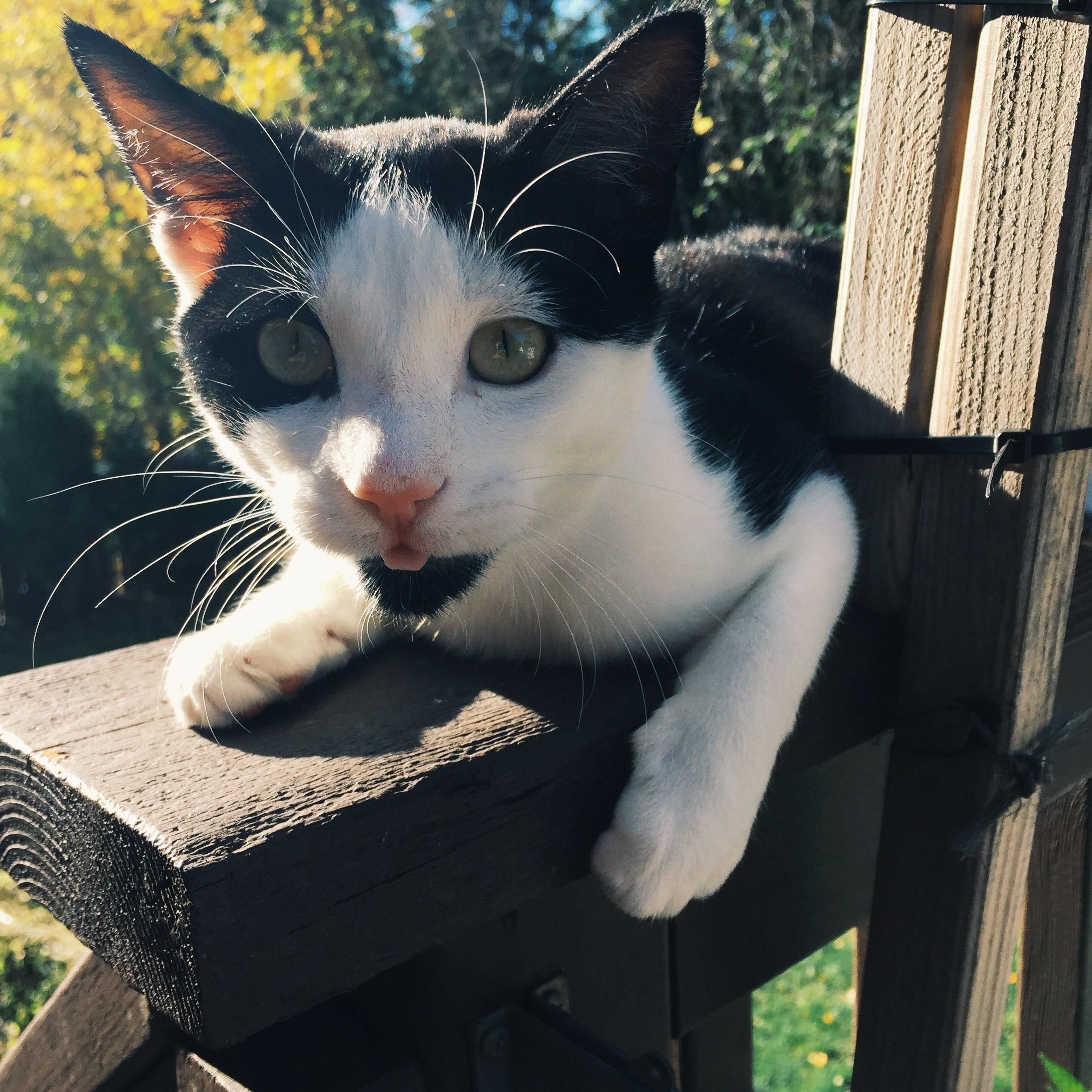 My cat is enjoying the weather! http://ift.tt/2dAyZy7
