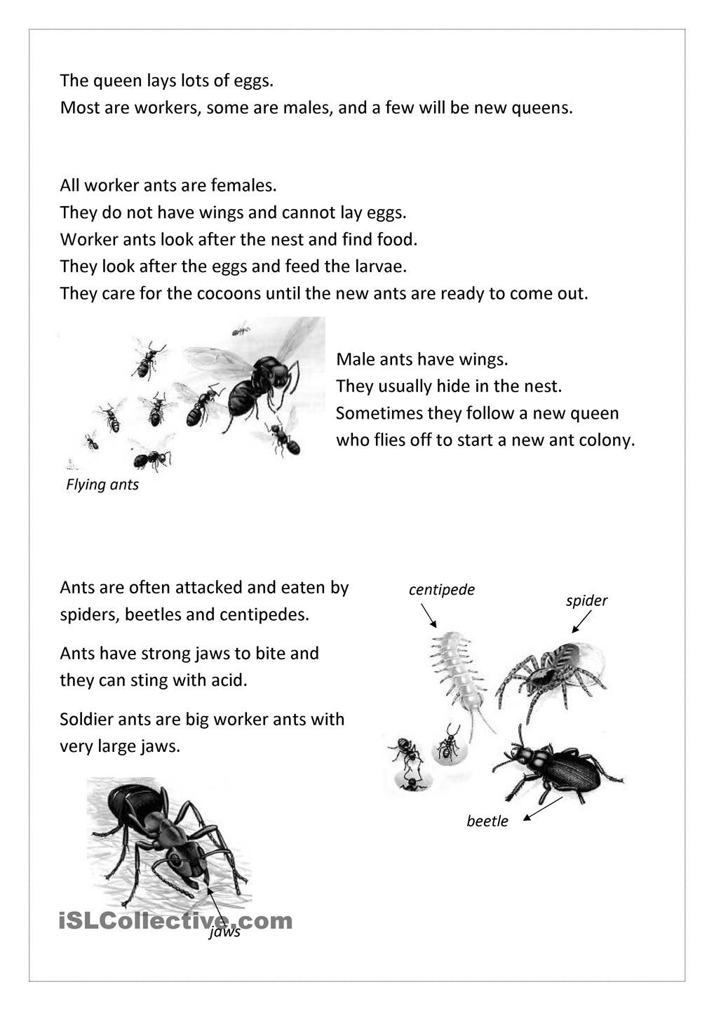 Pin By Alleyce Pang On Science Pinterest Ant Worksheets And