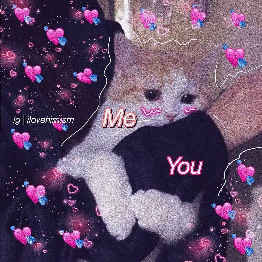 Idk Why I Keep Making Animal Ones Lovememes Love Memes Meme Wholesomememes Wholesome Cute Memesdaily C Cute Love Memes Cute Memes Cute Animal Memes
