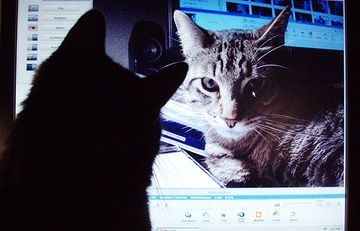Keep Cats From Chewing On Electric Cords And Chargers With Images Cat Proofing Cats How To Cat