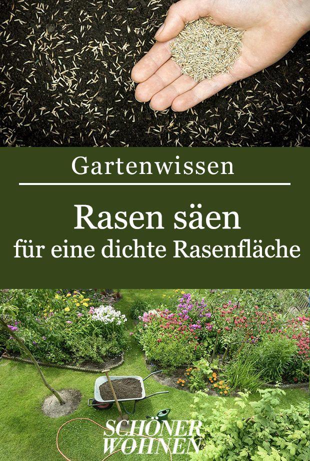 Rasen säen: So klappt's mit einem dichten Rasen #gartenlandschaftsbau