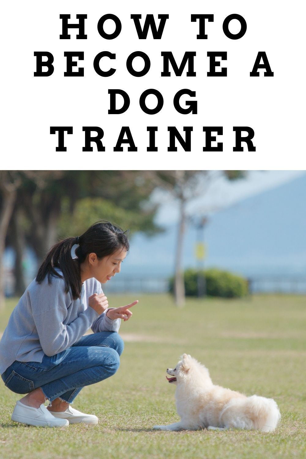 How To Become A Dog Trainer In 2020 Become A Dog Trainer Dog Trainer Dog Training School