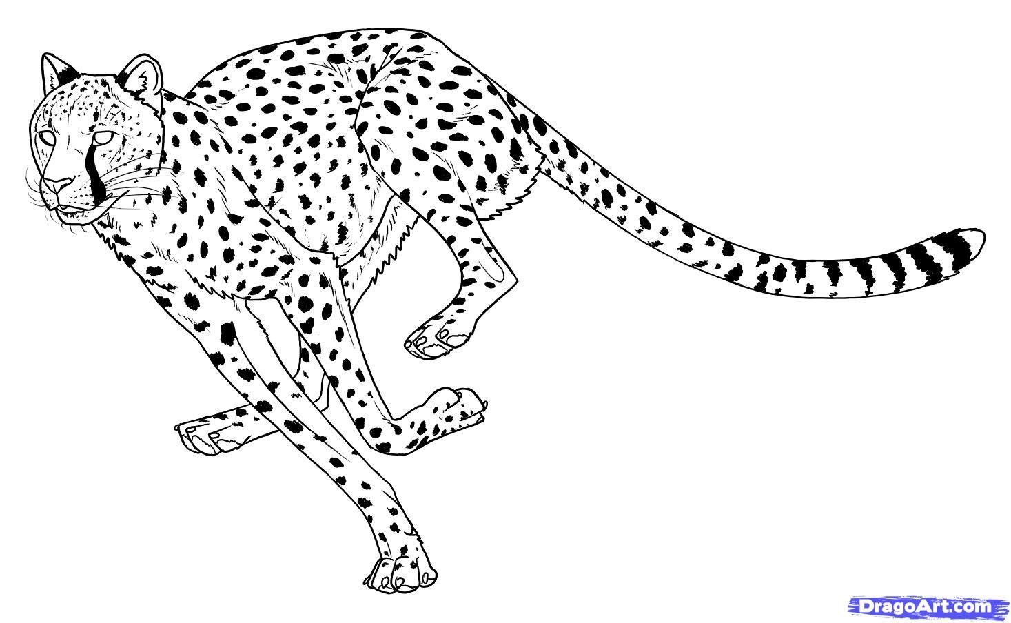 how to draw cheetahs, cheetah cat step 15 | Cheetah ...