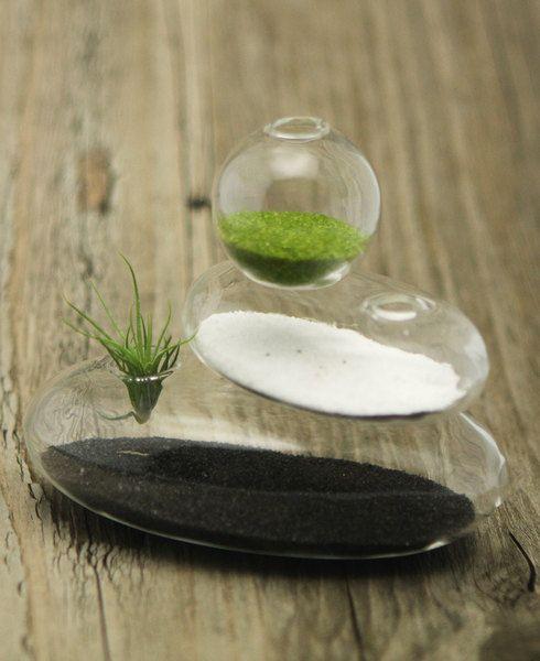 Small Glass Zen Cairn Terrarium Air plants, Terraria and Plants